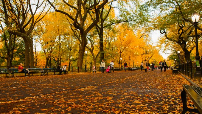 skov træer efterår